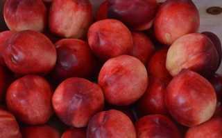 Гибрид абрикоса, сливы и нектарина