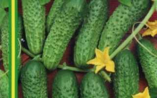 Огурцы Наташа: описание и характеристика сорта, урожайность с фото
