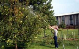 Обработка яблонь летом от болезней и вредителей: химические препараты и народные средства
