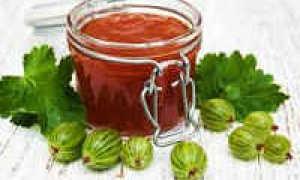 Соус из крыжовника на зиму: 11 лучших рецептов с пошаговым приготовлением