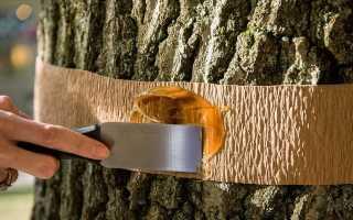 Ленточная ловушка для деревьев от садовых вредителей: как сделать своими руками против муравьев для яблонь и других плодовых деревьев? Какой клей используется? Как установить?