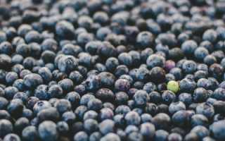 Как сохранить чернику на зиму в свежем виде, чтобы сохранились все витамины