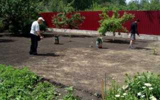 Посадка газона осенью: как это сделать правильно, даты и инструкции шаг за шагом