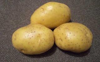 Картофель Джувел: описание и характеристика сорта, урожайность с фото