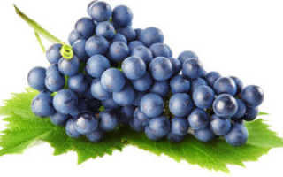 Вино из синего винограда: как сделать в домашних условиях, простой пошаговый рецепт