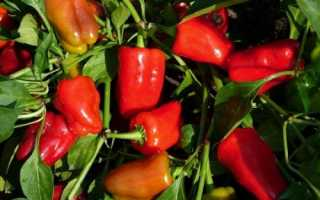 Можно ли сажать огурцы и перцы в одной теплице: возможно ли соседство