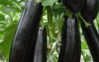 Баклажан Король рынка F1: описание и характеристика сорта, урожайность с фото