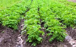 Лазурит, Титус и Гербитокс от сорняков на картошке и аналоги