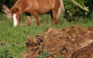 Минеральные, органические, фосфорные, калийные и азотные удобрения: их виды и характеристика