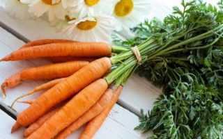Как хранить морковь на балконе зимой: можно ли это делать в домашних условиях и при какой температуре хранить в квартире, собранные осенью корнеплоды; Интернет-портал о сельском хозяйстве
