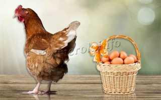 Почему куры несут мелкие яйца: причины и методы решения проблемы