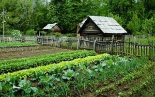 Растения для кислой почвы: 22 растения, которым необходим низкий pH почвы | Садовники