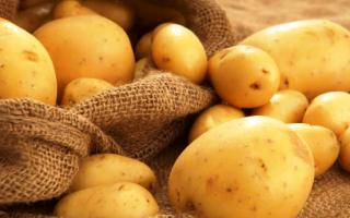 Когда выкапывать картошку на хранение в 2020 году: хорошие дни
