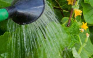 Как часто поливать огурцы в теплице и когда лучше