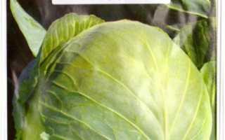 Капуста Бригадир f1: характеристика и описание сорта, отзывы дачников с фото