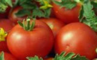 Сорта картофеля: лучшие виды с описанием и фото