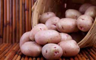 Картофель Хозяюшка: характеристика и описание сорта, отзывы дачников с фото