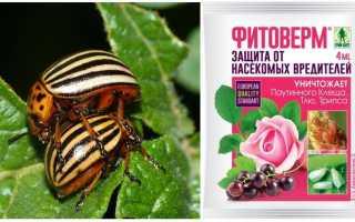 Фитоверм от колорадского жука: как развести, инструкция по применению