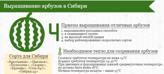 Выращивание арбузов в открытом грунте и теплице в Сибири: посадка и уход