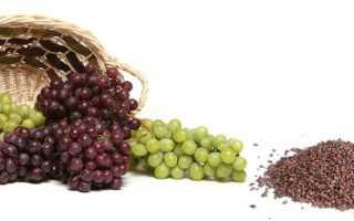 Как вырастить виноград из косточки в домашних условиях: посадка и уход
