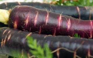 Фиолетовая морковь: полезные свойства, описание и особенности выращивания с фото