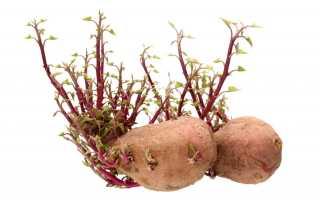 Молодая картошка: польза и вред, как прорастить и когда сажать