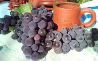Как хранить виноград в домашних условиях на зиму в холодильнике и погребе
