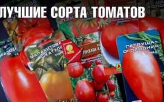 Томат Министр: характеристика и описание сорта, отзывы садоводов с фото