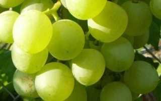 Виноград Белое чудо: описание и характеристики сорта, происхождение и выращивание