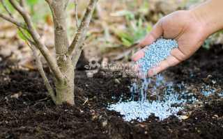 Подкормка вишни во время созревания плодов и после сбора урожая: чем удобрять