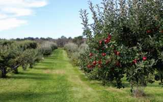 Как правильно посадить яблоню весной, летом и осенью: уход за саженцем