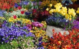 Многолетние цветы для Сибири: самые неприхотливые и долгоцветущие, фото-обзор