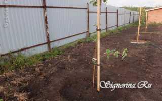 Как сажать яблони в глинистую почву: правила и рекомендации опытных садоводов