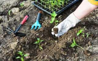 Правила посадки и выращивания перца и помидоров в одной теплице