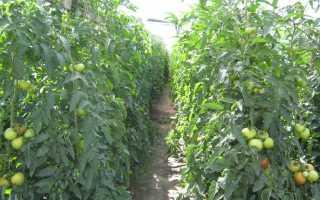 Полудетерминантный сорт помидор: что это значит, виды для теплиц и парников