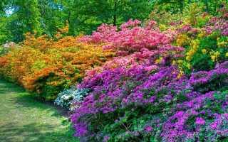 Многолетние кустовые цветы для сада: описание и характеристики видов, оформление