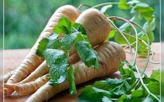 Пастернак: выращивание и уход в открытом грунте, посадка под зиму семенами