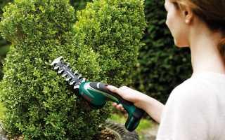 Обрезка деревьев туи: правильная обрезка