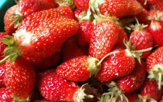 Клубника Золушка: описание и характеристики сорта, способы размножения, сбор урожая