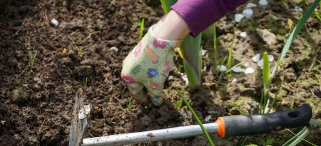 Как сделать грядку с нуля без сорняков: идеи и методы прополки