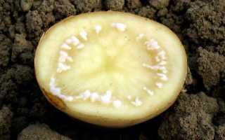 Болезни картофеля: описание и лечение, борьба с ними и фото