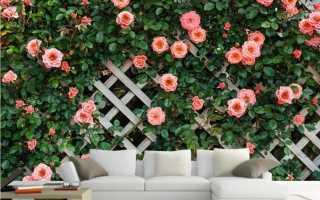 Почему плетистая роза не цветет: причины, как помочь растению, профилактика