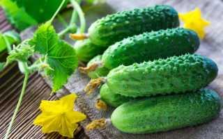 Огурцы Шмель f1: описание и характеристика сорта, урожайность с фото