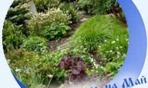 Лунный календарь огородника май 2020 год: посадочные дни, таблица