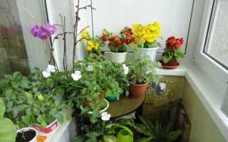 Какие домашние растения не будут цвести без прохладной зимы? САДЫ
