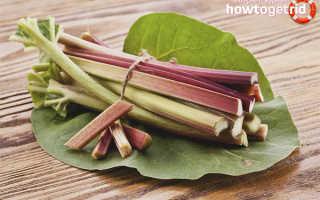 Растение ревень: полезные свойства и его применение, противопоказания