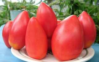 Томат Обские купола: урожайность и характеристика, описание с фото