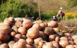 Как хранить картошку в квартире в домашних условиях правильно