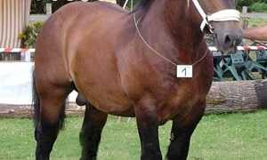 Породы лошадей: список и описания 40 самых лучших, характеристики и названия