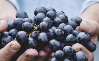 Виноград Фуршетный: описание и характеристики сорта, способы размножения и выращивание